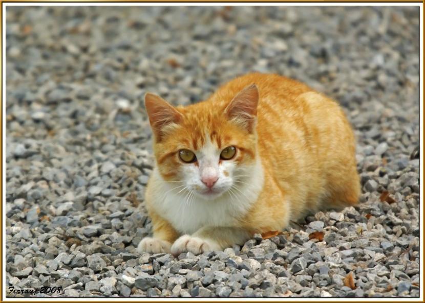 gato_bicolor_callejero